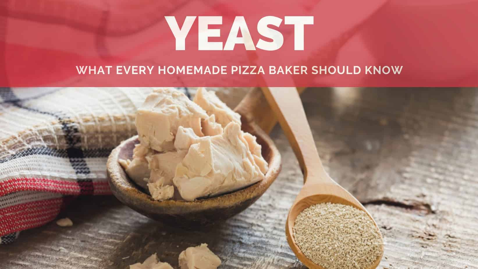 Best Yeast what you need to know image